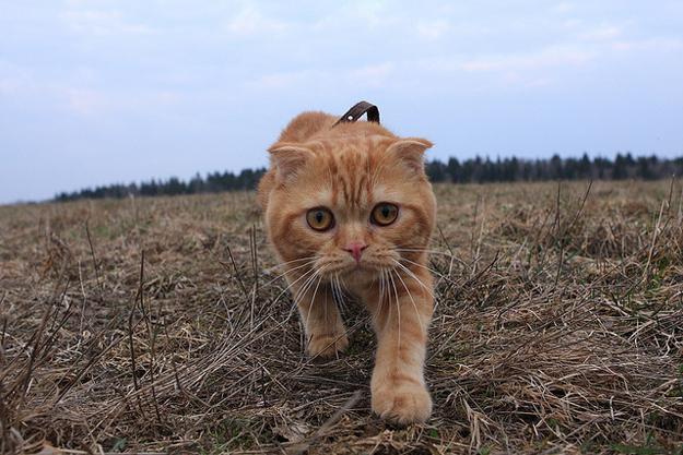 Edlieza Kucing