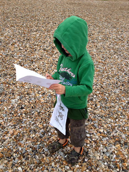 identifying shells
