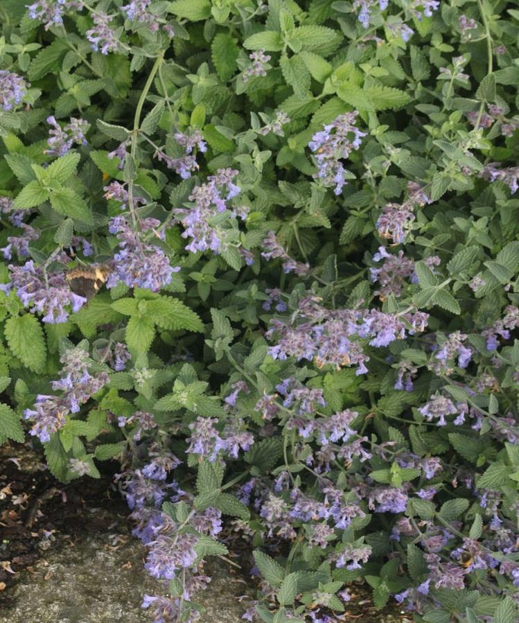 C mo crear un jard n de plantas arom ticas mundohumano for Azucena plantas jardin