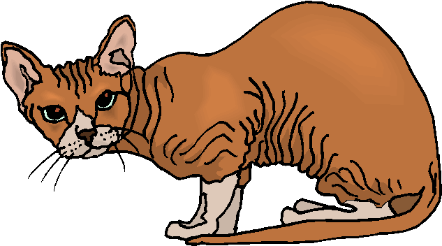 Sphynx Cat Free Animal Clipart