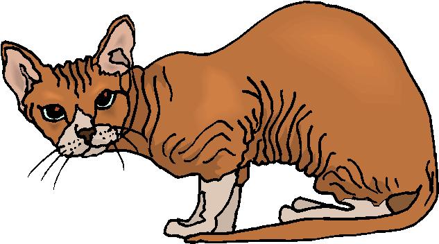 Sphynx Cat Free Animal Clipart