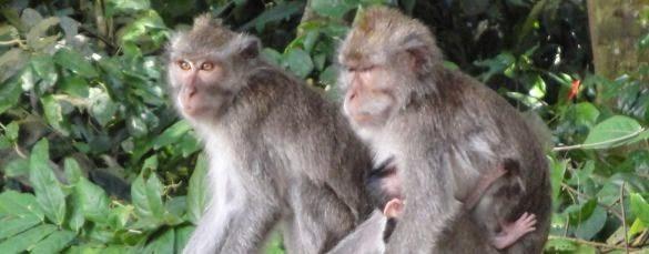 Paket Tur Desa Seni Ubud Bali dan Menjelajahi Hutan Monyet - Ubud, Desa, Seni, Gianyar, Bali, Liburan, Wisata, Atraksi