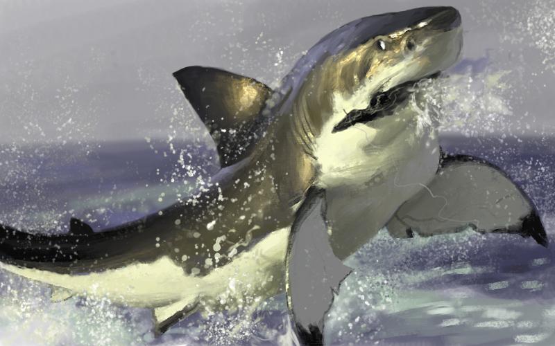 DSG 1724: Shark Attack