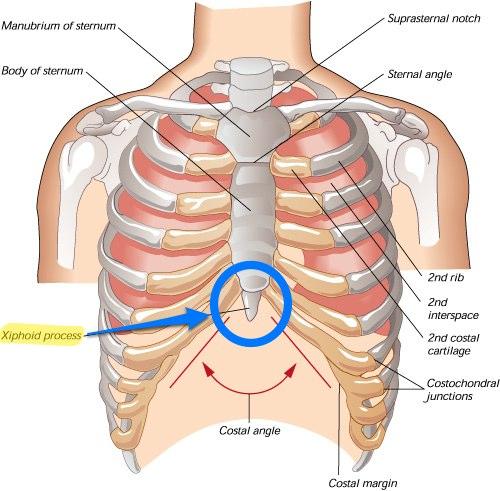 brosk i bröstet