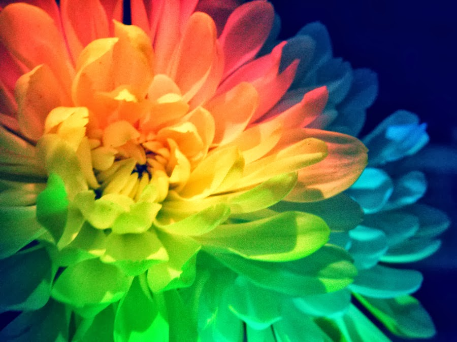 rainbow flower background - photo #17