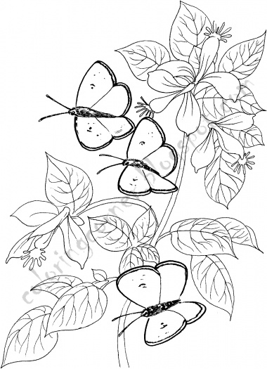 Butterfly Coloring Pages title=