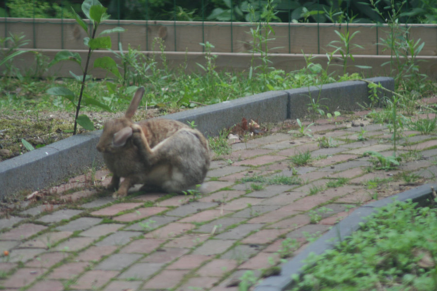 Bijzonder konijntje