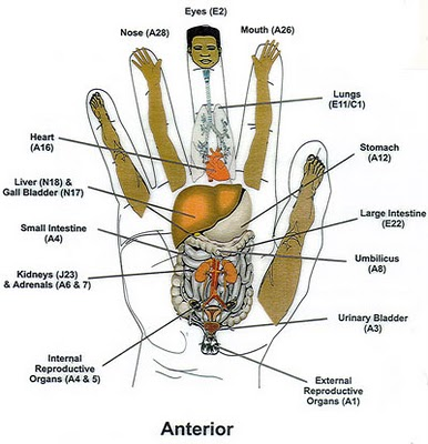 shiatsu pressure points