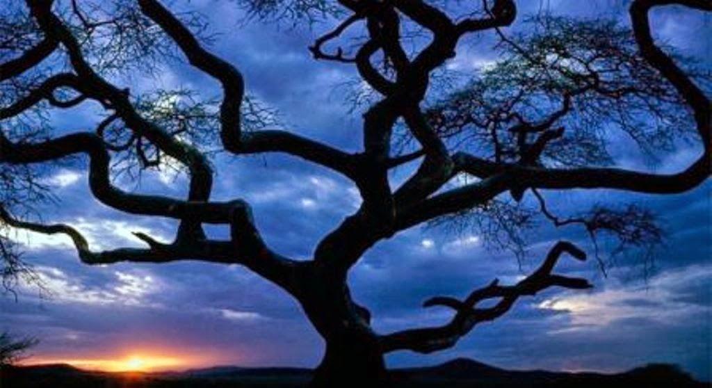 Gambar Pohon Siluet Wallpaper Pemandangan Alam Cantik
