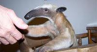pantun melayu sindiran mulut muncung kakcik seroja, images by google