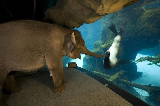 An Elephant Meets A Sea Lion