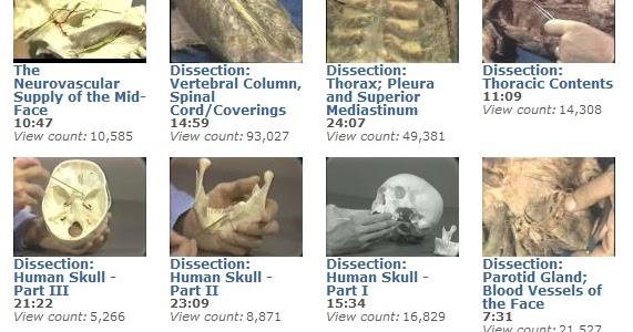Anatomy dissection videos