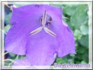 Blüte im Ausgust
