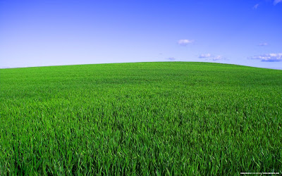 Deep Green Spring Background for Desktop
