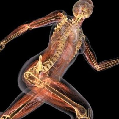 Biologia Humana Wallpaper Anatomía Humana