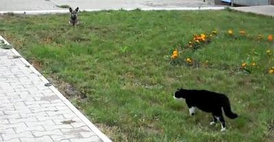 Cachorro x Gato
