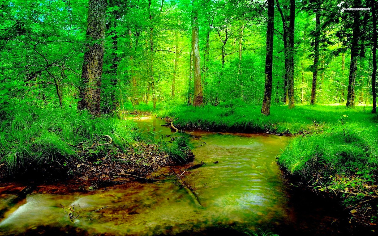 Full HD Widescreen Lush Green Natural Place Backgrounds