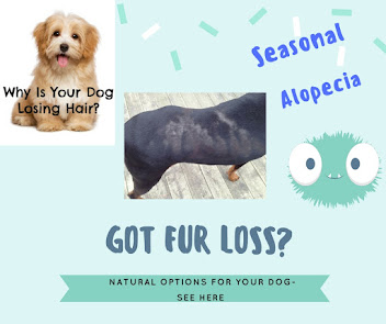 NEWS Flash !  Seasonal Alopecia Help is here!
