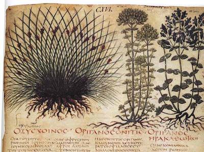Erbe e piante officinali nella storia