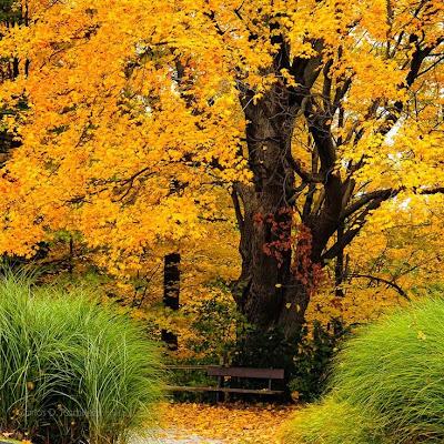 Mùa lá rụng ở Quebec, Canada