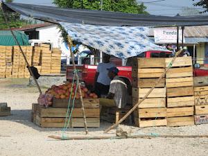 mango venders