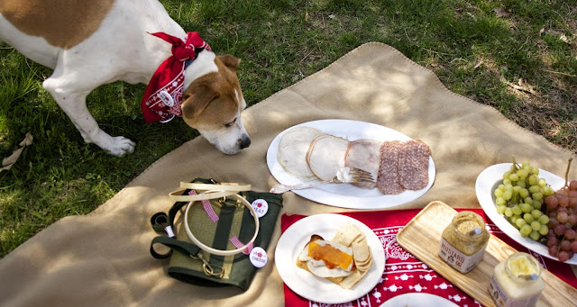 dog at picnic: simplelivingeating.com