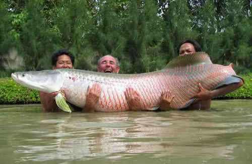 Foto Ikan Raksasa - Gambar Hewan Aneh dan Langka
