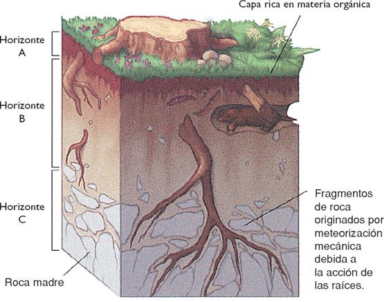 concepto de tipos de suelos: