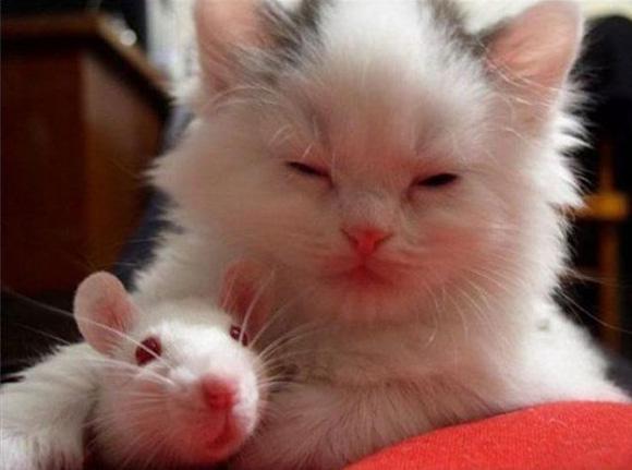 Imagens de amor entre gato e rato