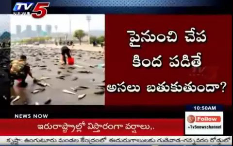 "Watch Video : What is the Magic Behind ""Fish Rain"" ? 