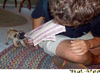 Funny baby dog