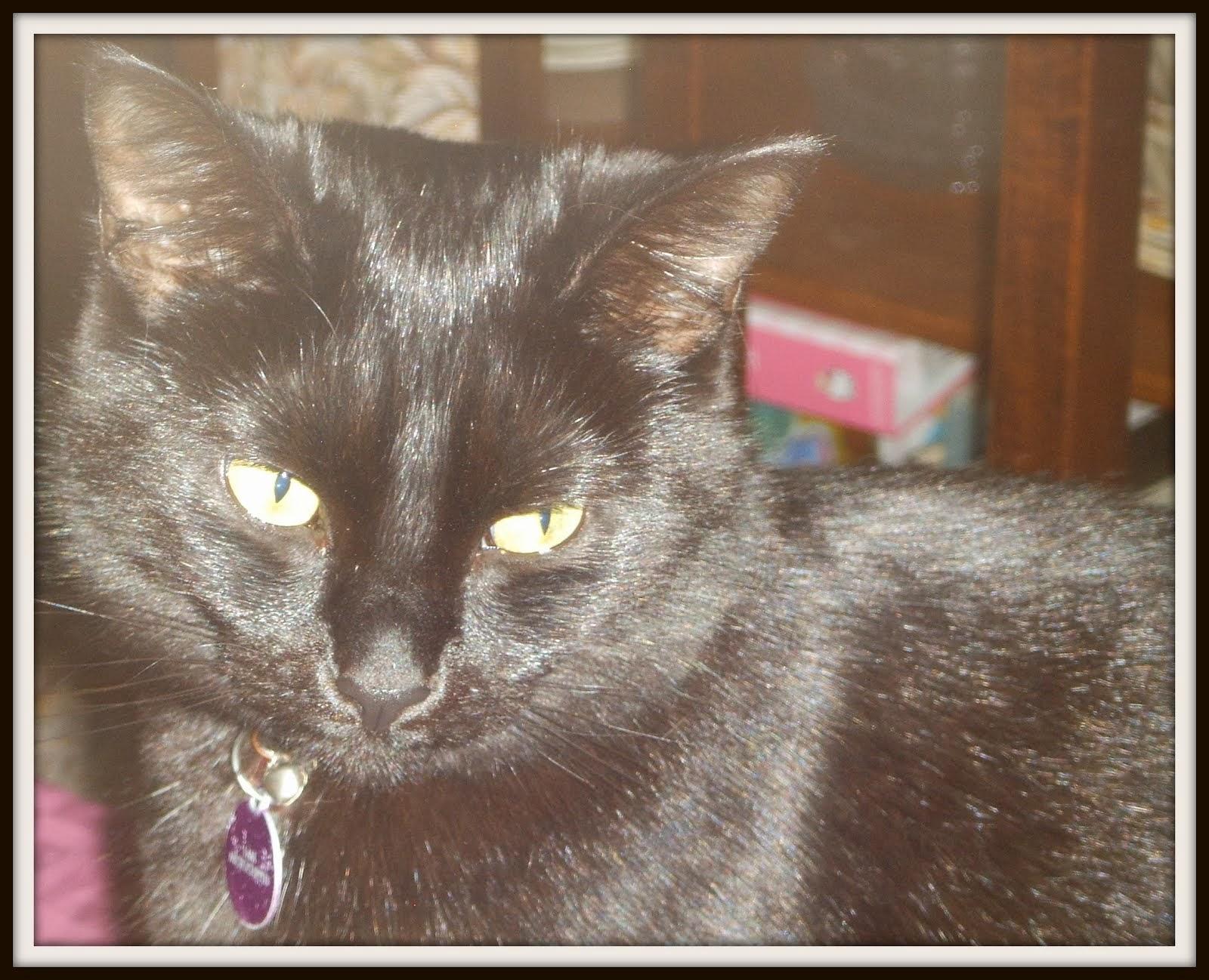 Molly-cat