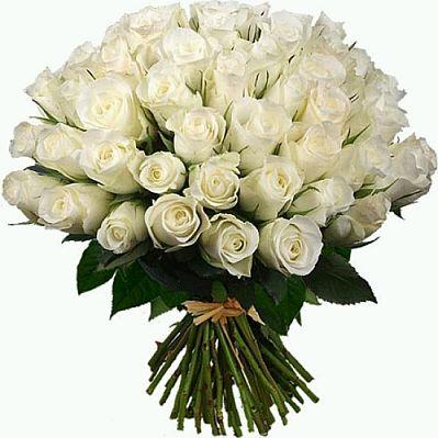 Flores fotos de rosas blancas parte 2
