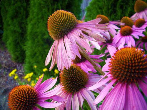 Unique World Flowers Blogcrunch