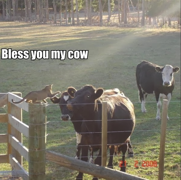 30 Funny animal captions - part 18 (30 pics), cat and cow, bless you my cow