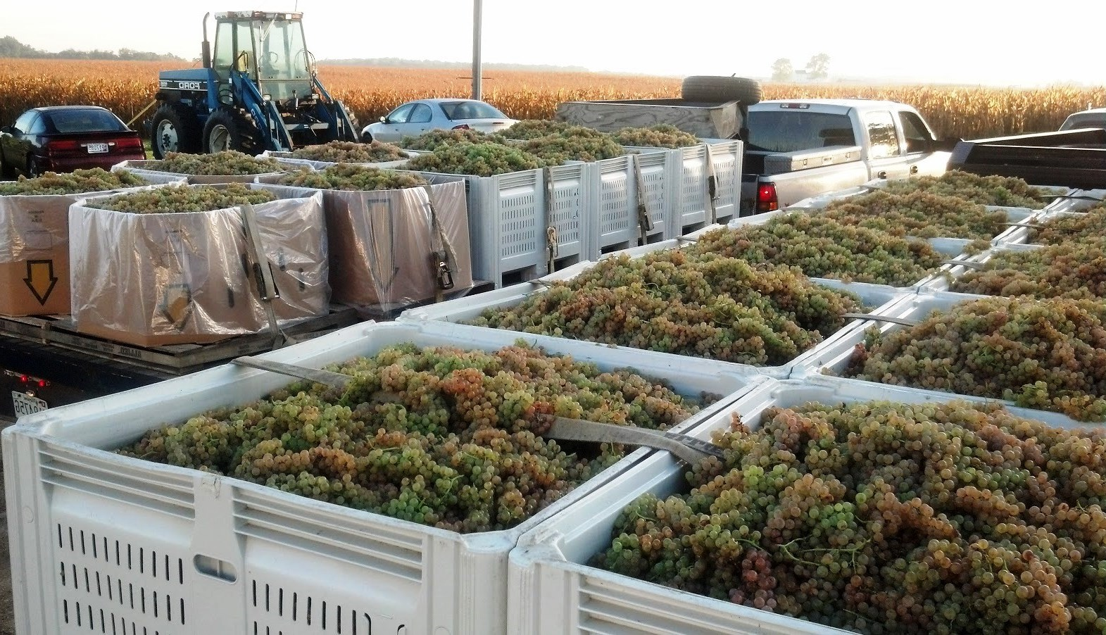 produce clerk the produce clerks handbook by rick chong wine grapes caselot s