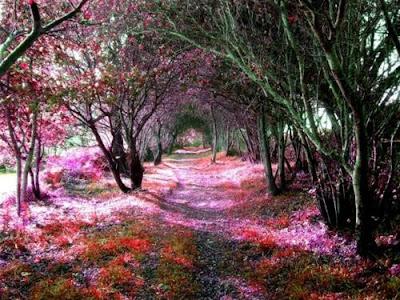 Tree Tunnel, Sena, Spain