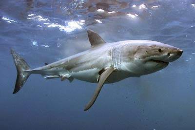 imagenes de animales del agua - Los 10 animales más peligrosos del mundo Fotos Infobae
