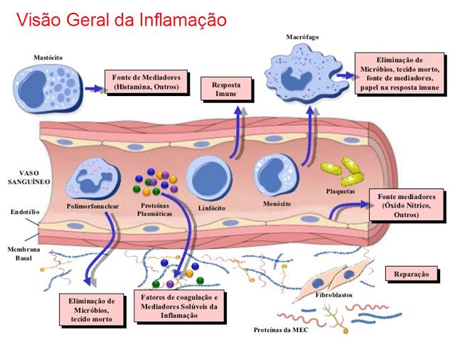 Visão geral da inflamação