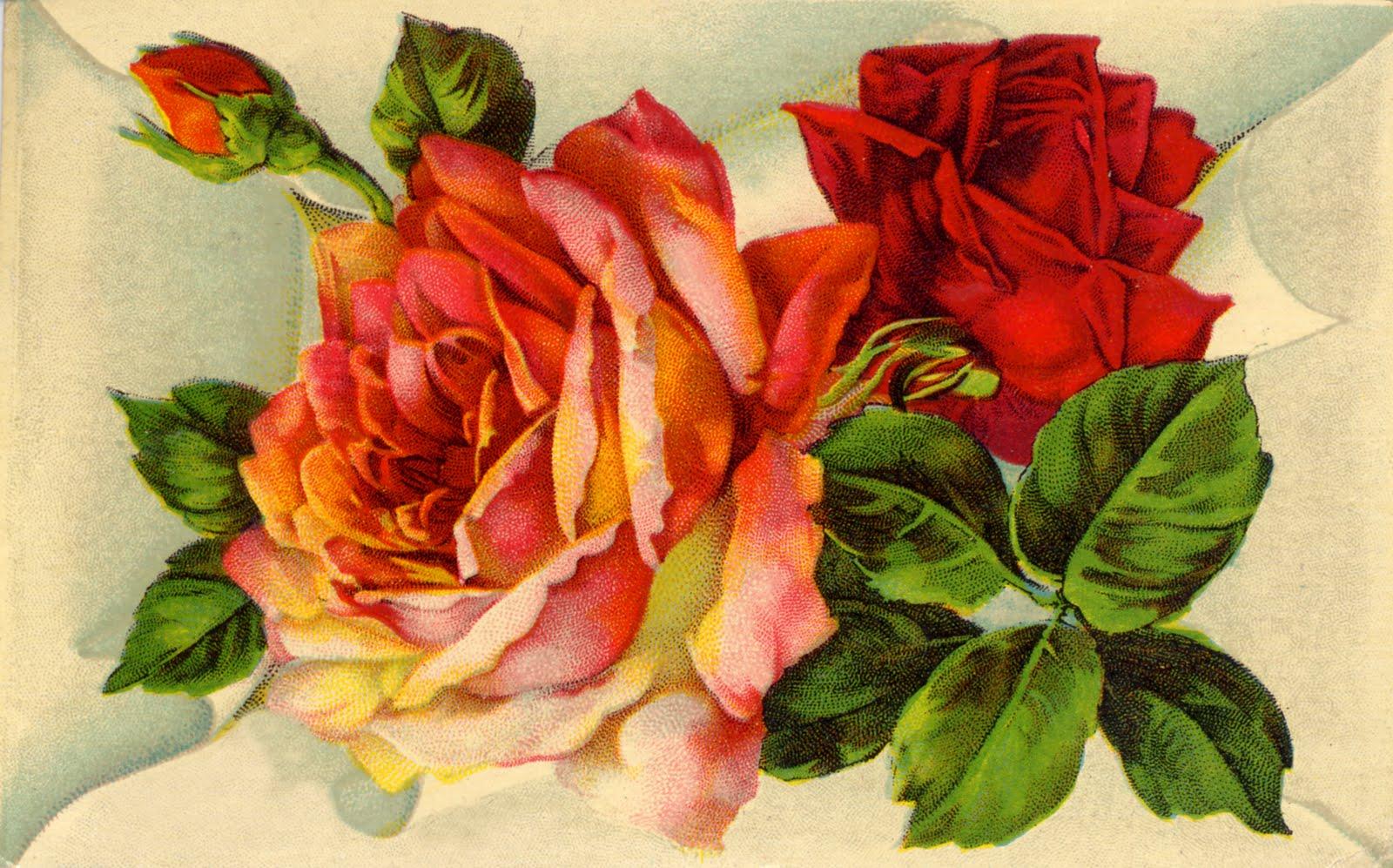 A Vintage Rose 103