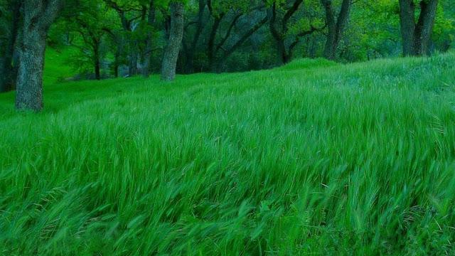 Bộ hình nền đồng cỏ xanh tươi mát
