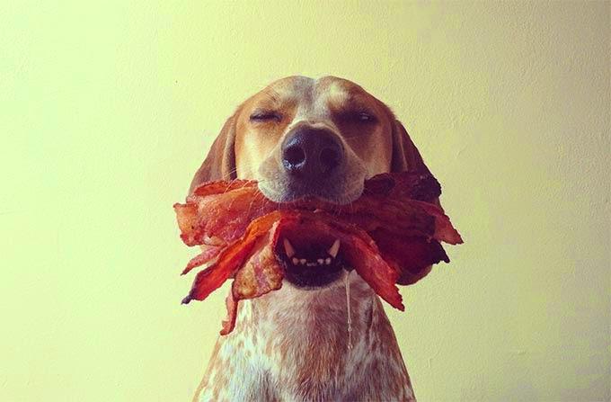 Cachorro pode comer bacon?