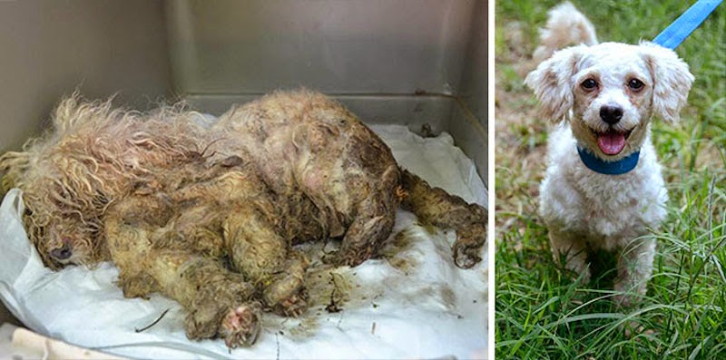 Treasure - 16 Before-and-After Photos Of Rescued Dogs