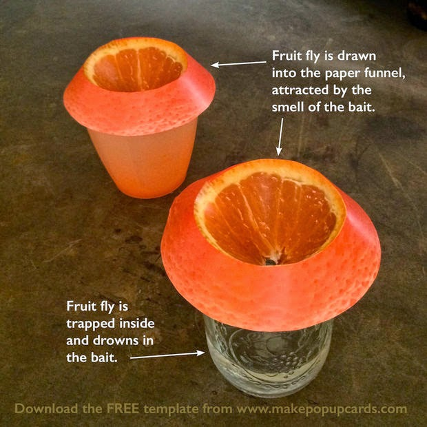 DIY Cheap, Efficient, Easy & Cute Fruit Fly Trap