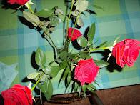 Botànica: La Rosa