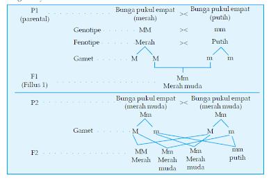 Diagram perkawinan