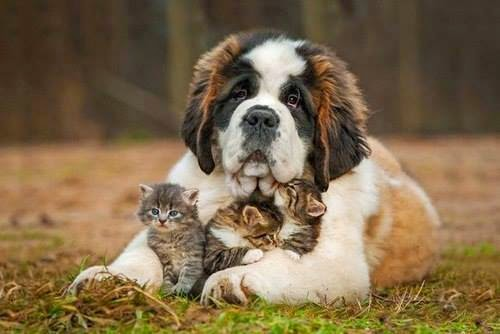 A dog and his cats