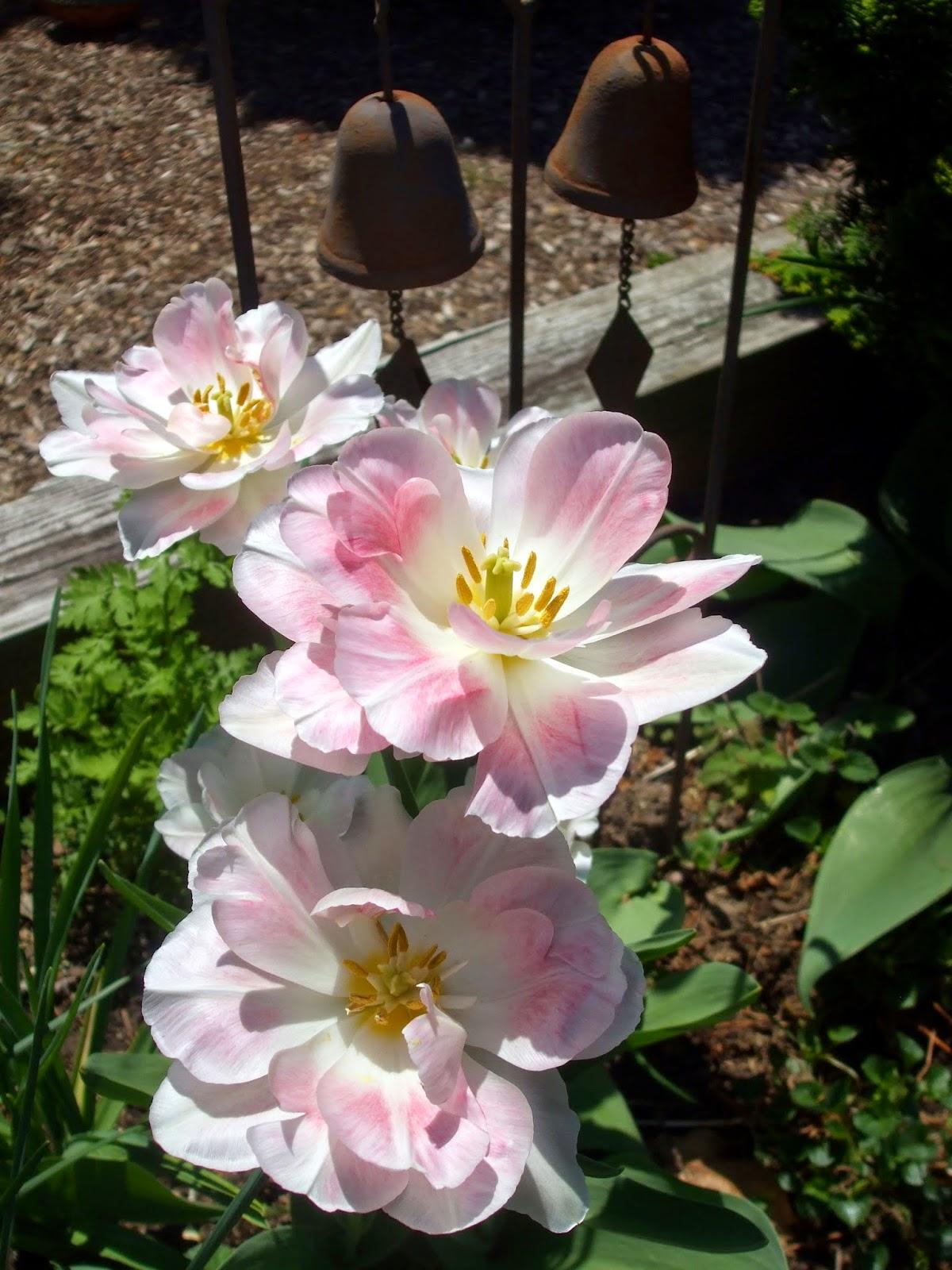 Rosemarys sampler in the garden spring edible flowers in the garden spring edible flowers mightylinksfo