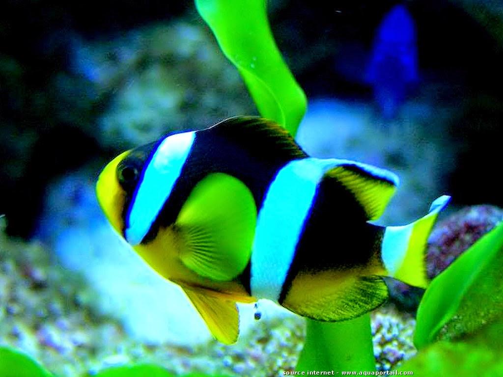 Démarrer et entretenir un Aquarium d'eau de mer
