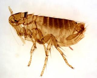 7 Parasit Paling Menyusahkan Di Dunia [ www.BlogApaAja.com ]